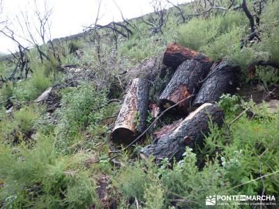 Sierra Gata - Senderismo Cáceres; puente de octubre la selva de irati patones de abajo sierra cebol